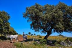 Dehesa草原通过de拉普拉塔方式西班牙 图库摄影
