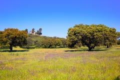 Dehesa草原通过de拉普拉塔方式西班牙 免版税库存图片
