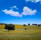 Dehesa草原通过de拉普拉塔方式西班牙 免版税图库摄影