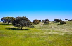 Dehesa草原通过de拉普拉塔西班牙 免版税库存图片