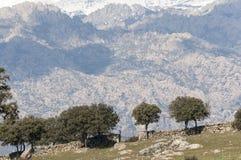 Dehesa en las montañas de Guadarrama Foto de archivo libre de regalías