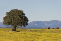 Dehesa, Extremadura (Spain) imagem de stock royalty free
