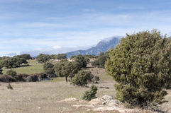 Dehesa in Guadarrama Mountains Royalty Free Stock Images