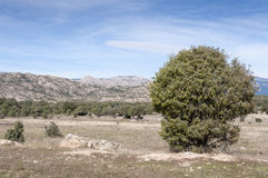 Dehesa in Guadarrama Mountains Stock Photo