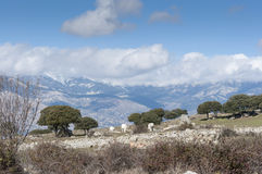 Dehesa in Guadarrama Mountains Royalty Free Stock Photo