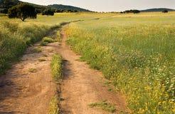 Dehesa krajobraz Zdjęcie Royalty Free