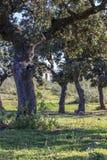Dehesa medelhavs- skog Fotografering för Bildbyråer