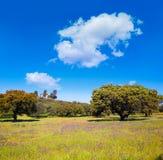 Dehesa obszar trawiasty obok przez De Los angeles Plata sposobu Hiszpania Obraz Stock