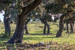 Dehesa, Śródziemnomorski las obrazy stock