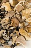 Dehydrated mushrooms Stock Photo