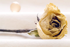 Dehydrated Rose And Sphere. Dehydrated rose that needs taken care on white bottom Stock Photography
