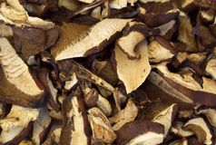 Dehydrated slices of mushrooms. Macro royalty free stock photography