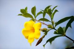 Dei fiori colorfull esotico molto e bello locali Immagini Stock Libere da Diritti