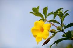 Dei fiori colorfull esotico molto e bello locali Immagini Stock