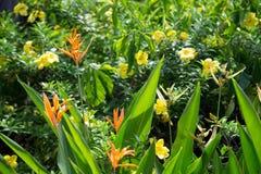 Dei fiori colorfull esotico molto e bello locali Fotografia Stock