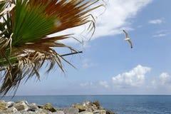 Dei Fiori de Riviera Imagens de Stock Royalty Free
