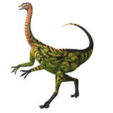 Deincheirus on White Stock Photos