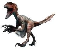 Deinonychus Royaltyfri Fotografi