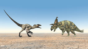 Deinonychus and Albertaceratops Stock Image