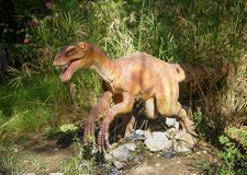 Deinonychus-Cretaceous /130-120 million years ago. In the Dinopa Royalty Free Stock Image