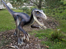 Deinonychus dinosaur. Model of the dinosaur in its natural size and ambience Stock Photography
