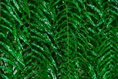 Deixa o fundo, teste padrão abstrato da folha, wallpap das folhas da floresta Foto de Stock