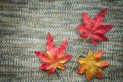 Deixa o outono vermelho em um fundo feito malha cinza Fotografia de Stock