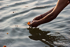 Deixando uma oferta da flor durante a adoração diária Fotografia de Stock