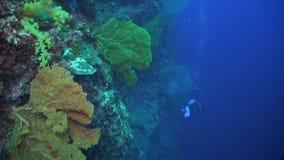 Deixe cair fora em um recife de corais vídeos de arquivo