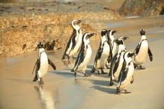 Deixe-nos ter um banho meus pinguins Foto de Stock