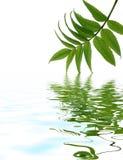 Deixe a reflexão na água imagens de stock royalty free