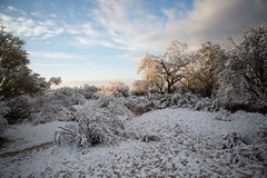 Dejáis le nevar foto de archivo libre de regalías
