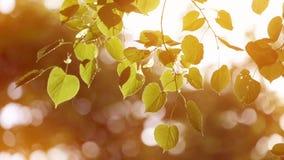 Deja el cántaro en el viento El otoño almacen de video