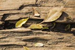 Deja el durmiente de madera Imagen de archivo libre de regalías