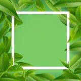 Deja el fondo de la estación del té verde libre illustration