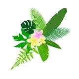 Deja el icono de las zonas tropicales Fotos de archivo