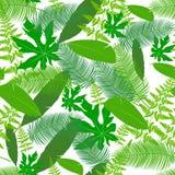 Deja el modelo del icono de las zonas tropicales Foto de archivo