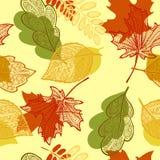 Deja el modelo del otoño Foto de archivo