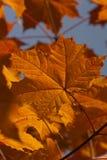 Deja otoño brillante Foto de archivo