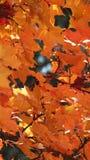 Dejar verano a la caída para el invierno Fotografía de archivo libre de regalías