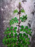 deje el arte del árbol en la pared y texturicelo Imagenes de archivo