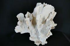 Deje el coral Imágenes de archivo libres de regalías