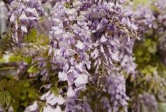 Deje la ayuda del ` s nuestras abejas de la miel sobrevivir Fotografía de archivo libre de regalías