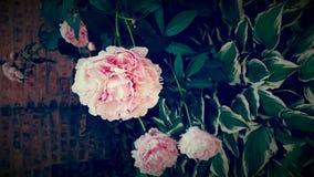Deje la rosa sea Fotos de archivo libres de regalías