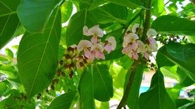 Deje a naturaleza las flores salvajes del bosque de la vida Imágenes de archivo libres de regalías