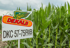 Dekalb Seed Corn Plot Royalty Free Stock Photos