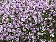 Deken van Bloemen stock afbeeldingen