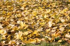 Dekking van dalings de gele bladeren stock afbeelding