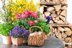 dekoraci Easter jajek kwiatów wiosna Obrazy Royalty Free