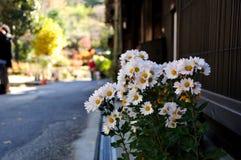 dekoraci japońska rośliny ściana Obrazy Royalty Free